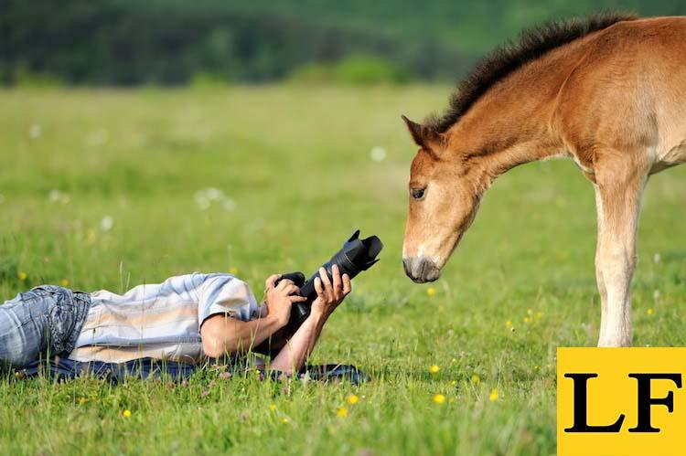 Фотографирование животных